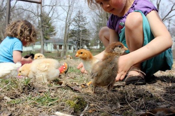 chicks1