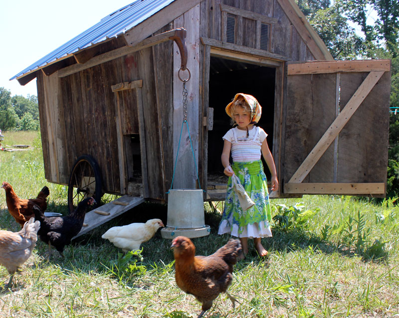 Amish shed chicken coop