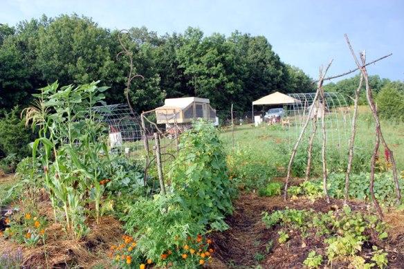 GardenLateJuly1