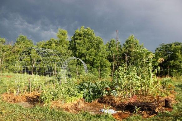 GardenLateJuly2