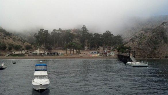 Toyon-Fog